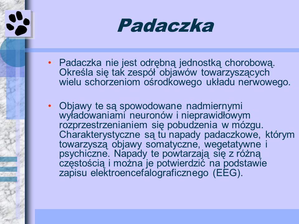 Padaczka Padaczka nie jest odrębną jednostką chorobową. Określa się tak zespół objawów towarzyszących wielu schorzeniom ośrodkowego układu nerwowego.