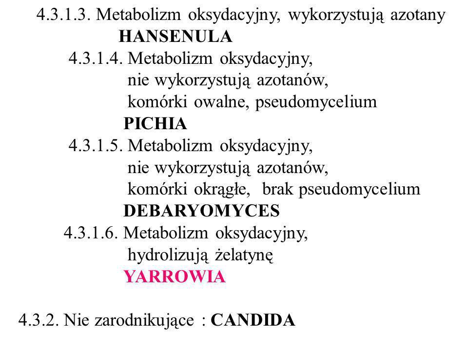 4.3.1.4. Metabolizm oksydacyjny, nie wykorzystują azotanów,