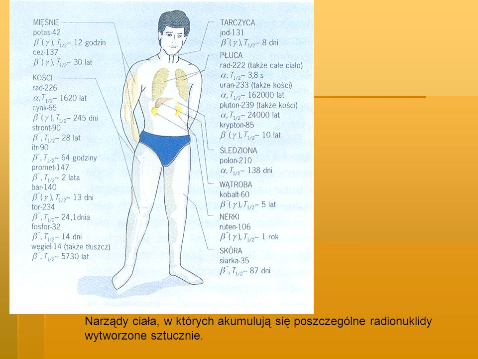 Narządy ciała, w których akumulują się poszczególne radionuklidy wytworzone sztucznie.