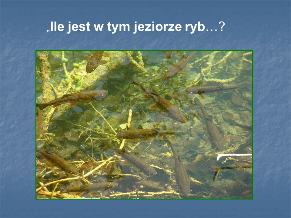 """""""Ile jest w tym jeziorze ryb…"""