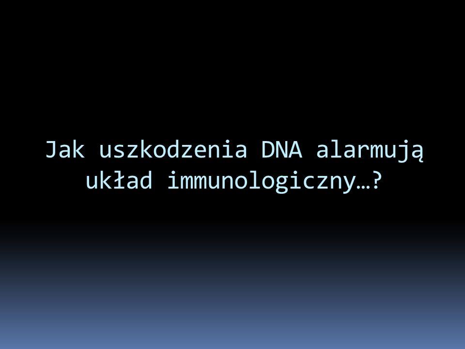 Jak uszkodzenia DNA alarmują układ immunologiczny…