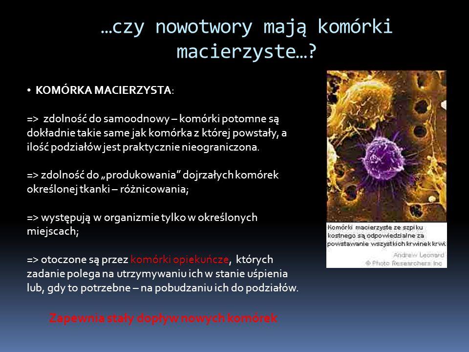 Zapewnia stały dopływ nowych komórek