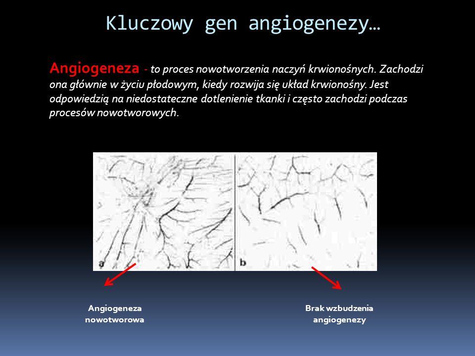 Angiogeneza nowotworowa Brak wzbudzenia angiogenezy