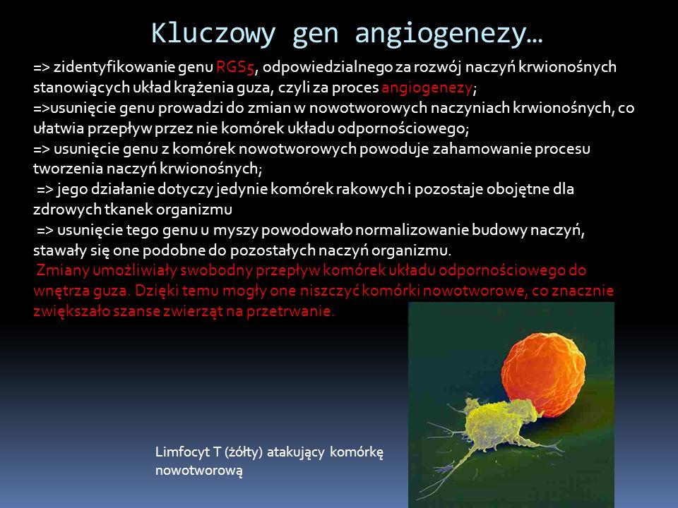 Kluczowy gen angiogenezy…