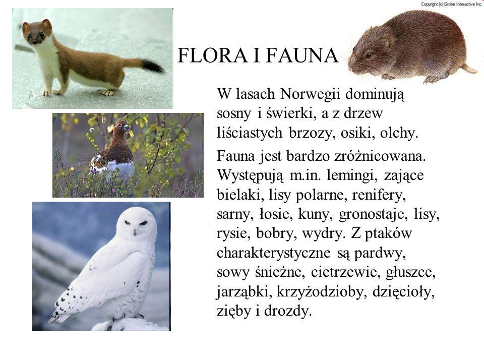 FLORA I FAUNA W lasach Norwegii dominują sosny i świerki, a z drzew liściastych brzozy, osiki, olchy.