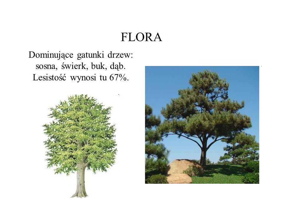 FLORA Dominujące gatunki drzew: sosna, świerk, buk, dąb. Lesistość wynosi tu 67%.