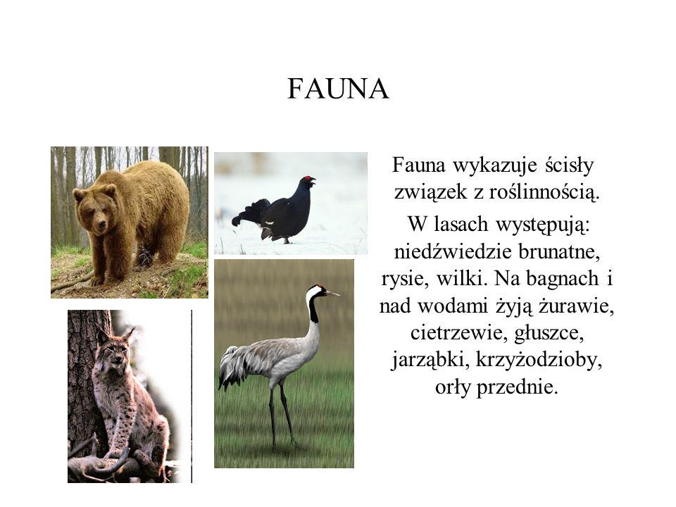 Fauna wykazuje ścisły związek z roślinnością.