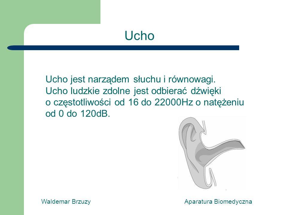 Ucho Ucho jest narządem słuchu i równowagi.
