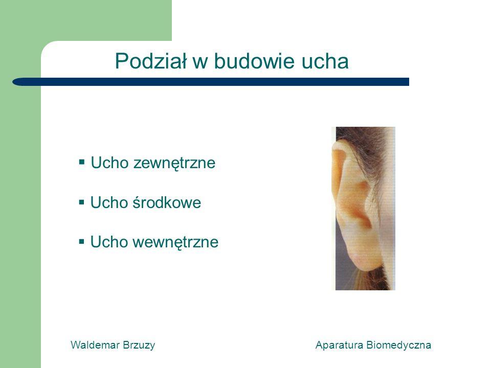 Podział w budowie ucha Ucho zewnętrzne Ucho środkowe Ucho wewnętrzne