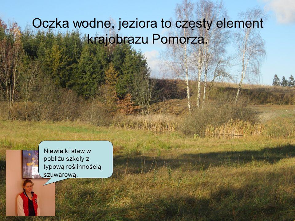 Oczka wodne, jeziora to częsty element krajobrazu Pomorza.