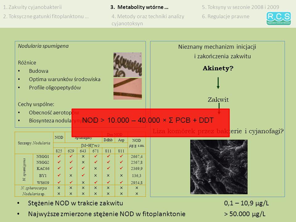 Stężenie NOD w trakcie zakwitu 0,1 – 10,9 µg/L