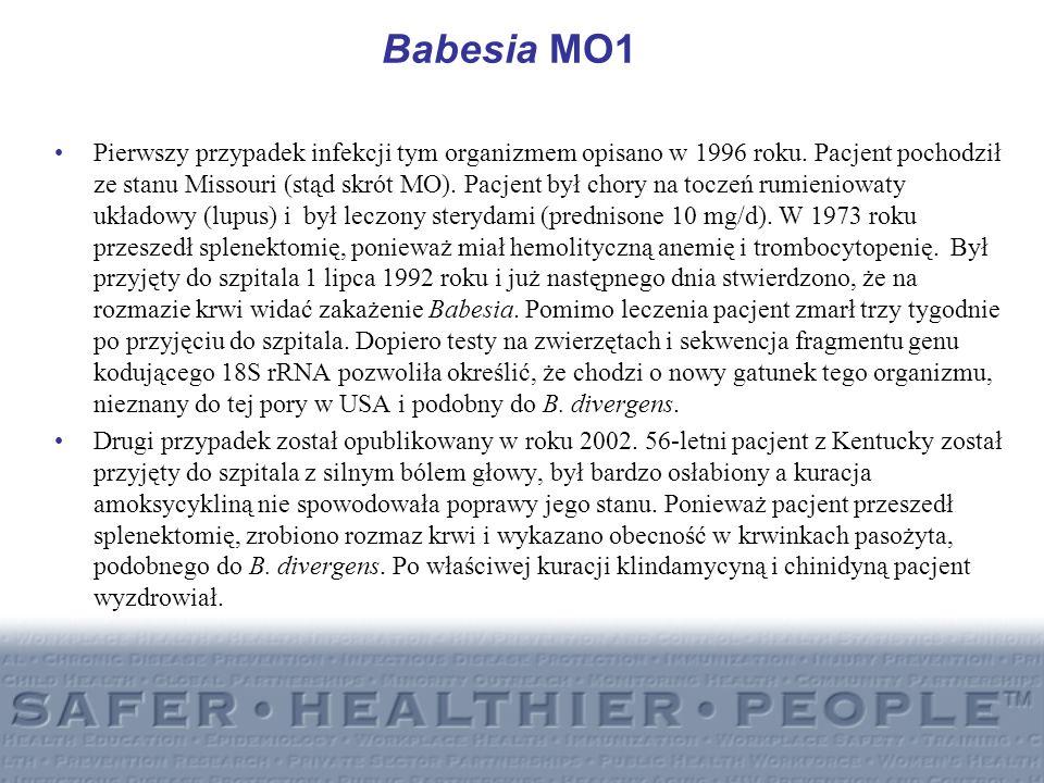 Babesia MO1