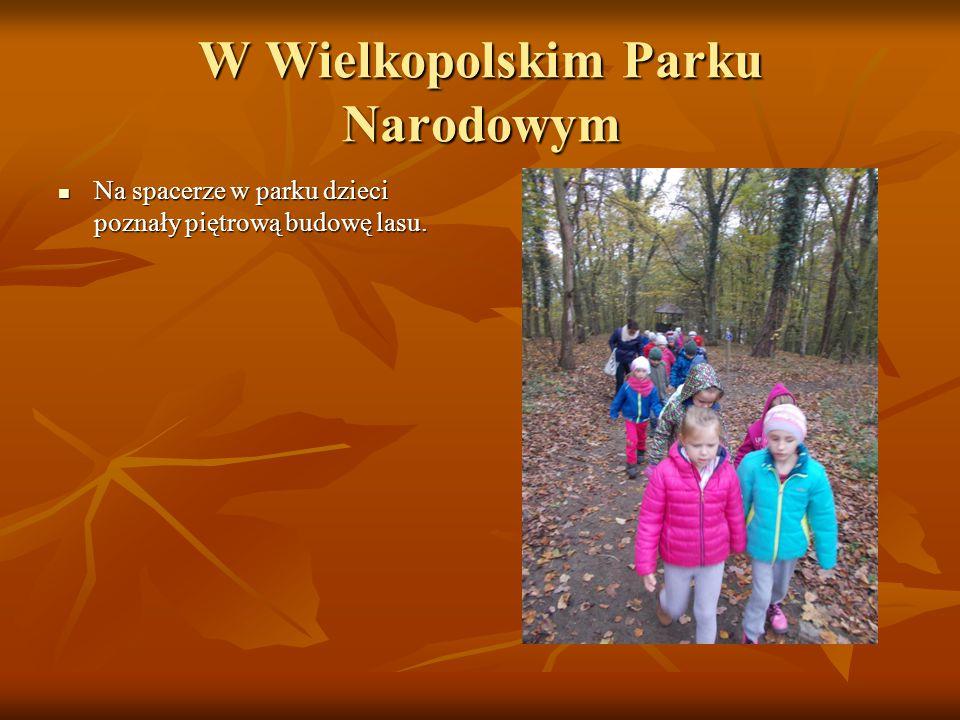 W Wielkopolskim Parku Narodowym