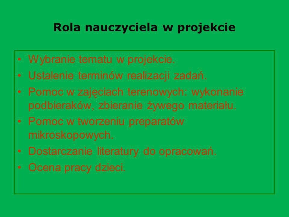 Rola nauczyciela w projekcie