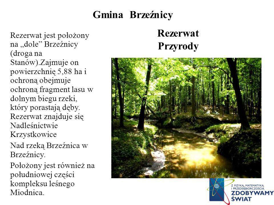 Gmina Brzeźnicy Rezerwat Przyrody