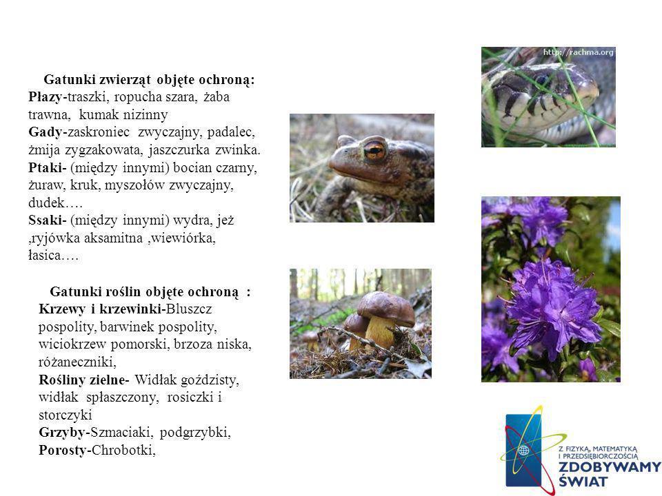 Gatunki zwierząt objęte ochroną: Gatunki roślin objęte ochroną :