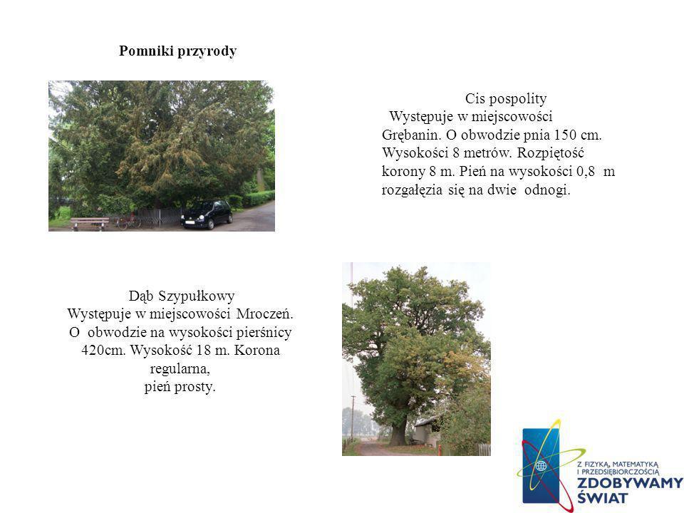 Występuje w miejscowości Mroczeń.
