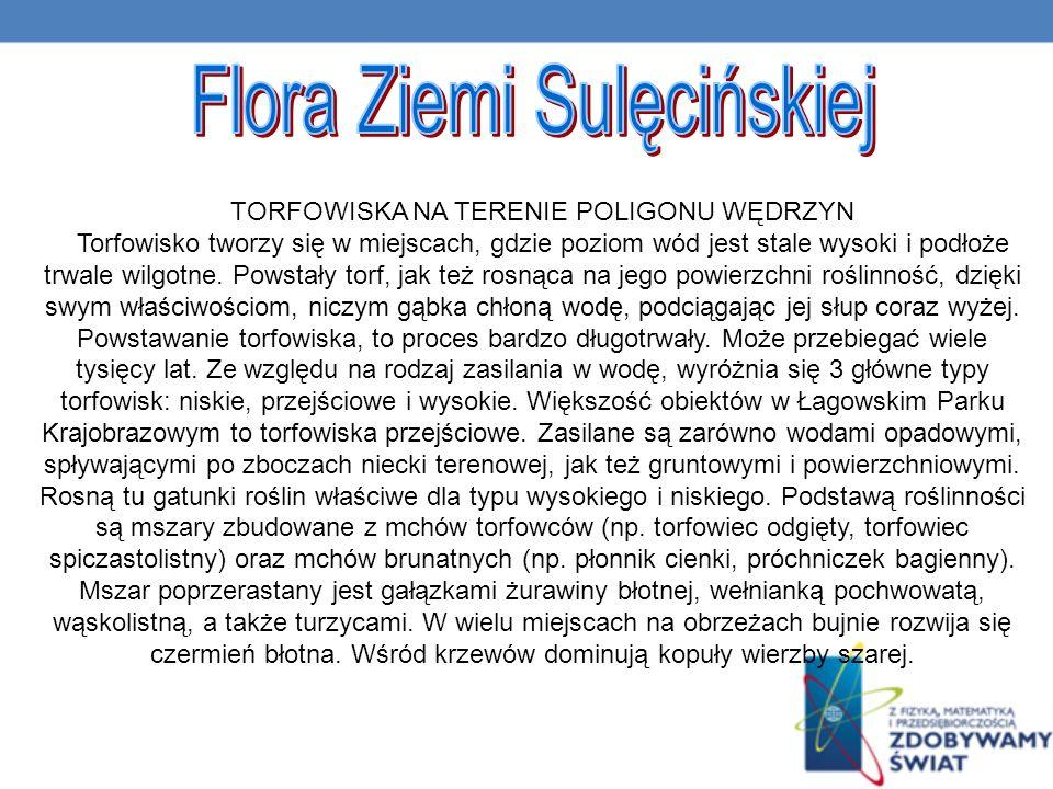 Flora Ziemi Sulęcińskiej