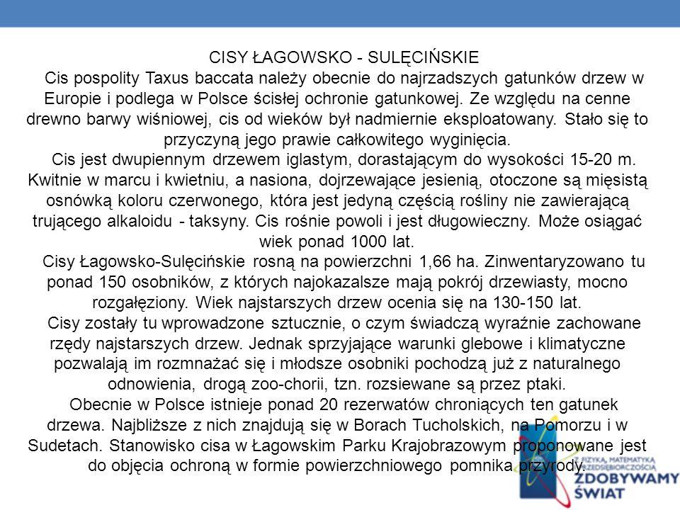 CISY ŁAGOWSKO - SULĘCIŃSKIE
