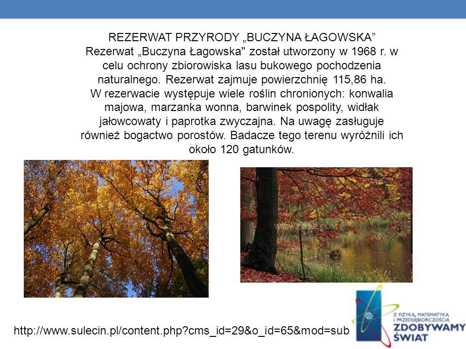 """REZERWAT PRZYRODY """"BUCZYNA ŁAGOWSKA"""