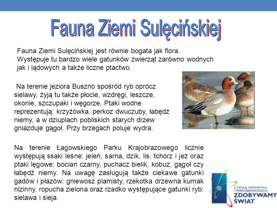 Fauna Ziemi Sulęcińskiej