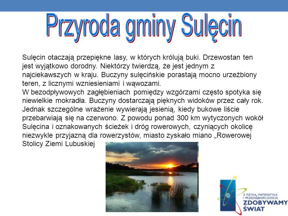 Przyroda gminy Sulęcin