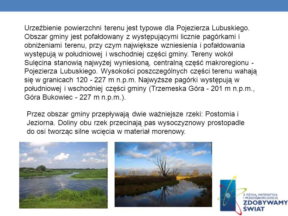 Urzeźbienie powierzchni terenu jest typowe dla Pojezierza Lubuskiego
