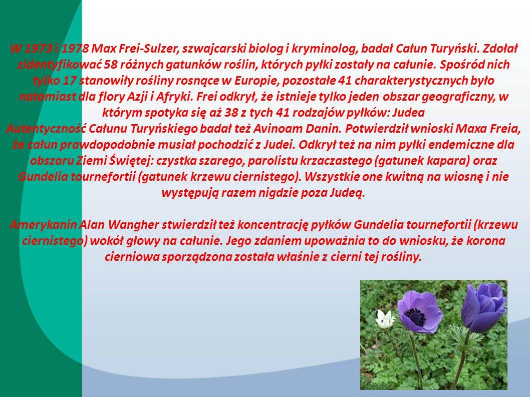 W 1973 i 1978 Max Frei-Sulzer, szwajcarski biolog i kryminolog, badał Całun Turyński. Zdołał zidentyfikować 58 różnych gatunków roślin, których pyłki zostały na całunie. Spośród nich tylko 17 stanowiły rośliny rosnące w Europie, pozostałe 41 charakterystycznych było natomiast dla flory Azji i Afryki. Frei odkrył, że istnieje tylko jeden obszar geograficzny, w którym spotyka się aż 38 z tych 41 rodzajów pyłków: Judea