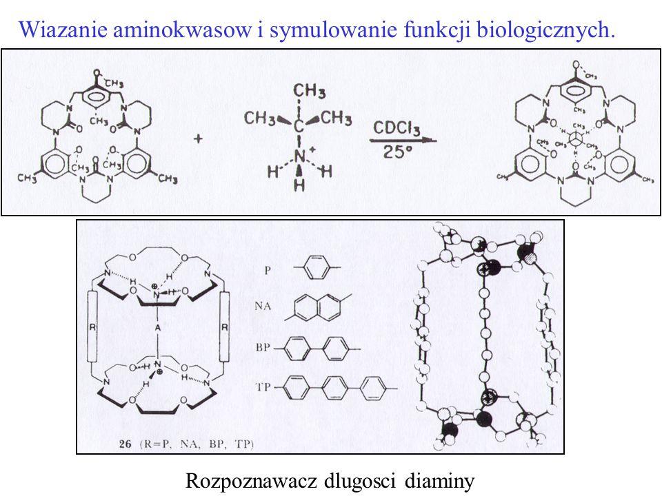 Wiazanie aminokwasow i symulowanie funkcji biologicznych.