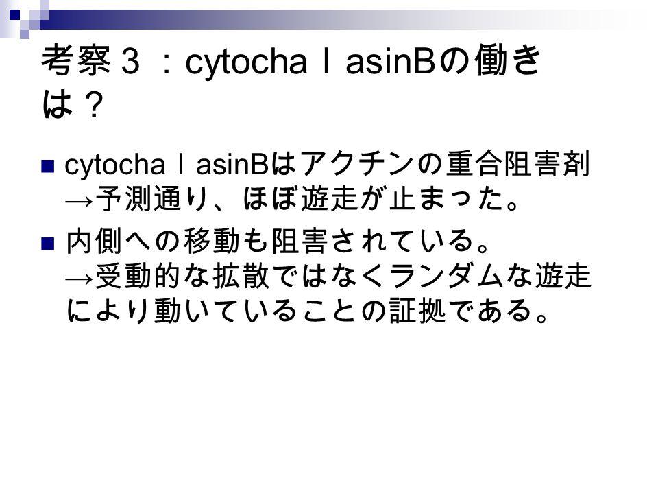 考察3:cytochalasinBの働きは?