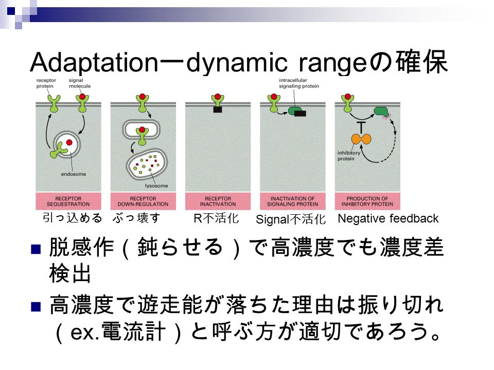 Adaptationーdynamic rangeの確保