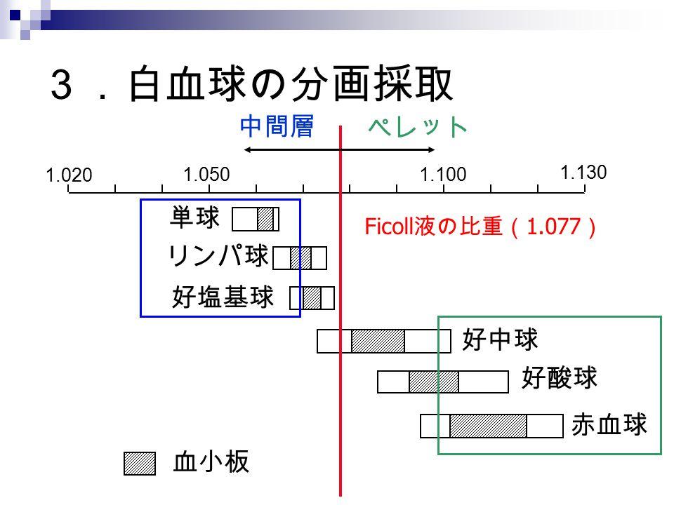 3.白血球の分画採取 中間層 ペレット 単球 リンパ球 好塩基球 好中球 好酸球 赤血球 血小板 Ficoll液の比重(1.077)