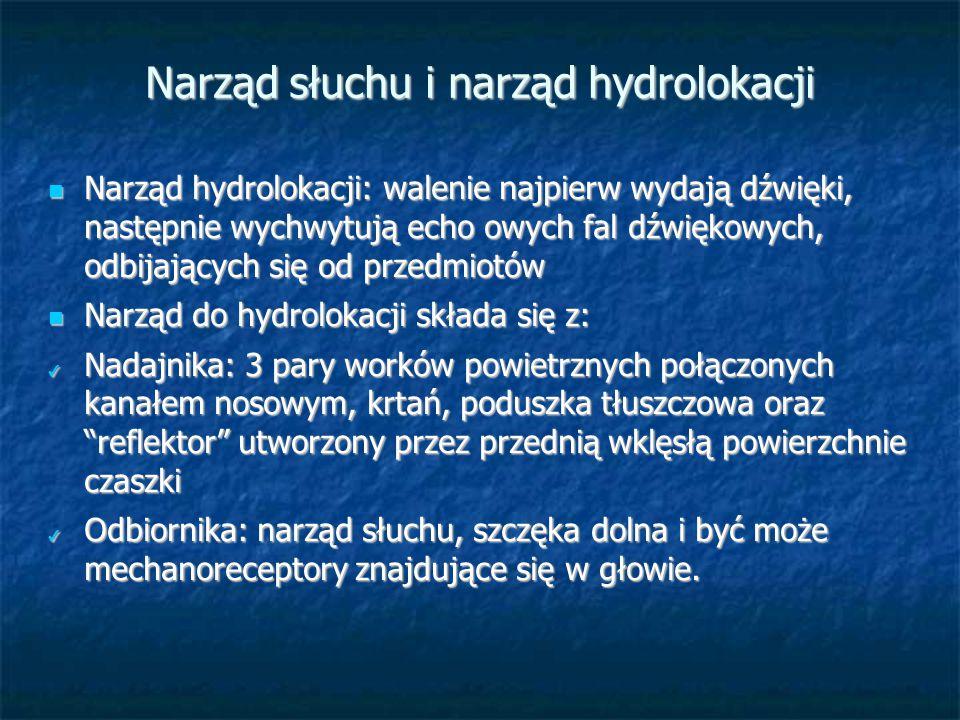 Narząd słuchu i narząd hydrolokacji