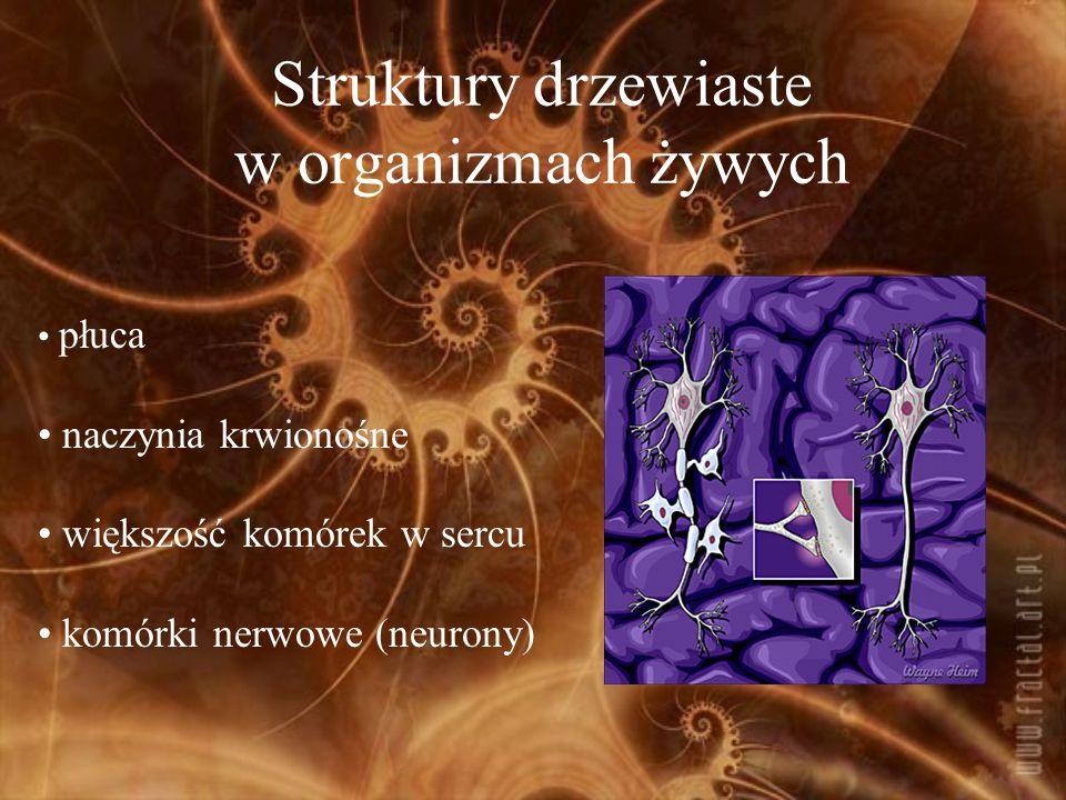 Struktury drzewiaste w organizmach żywych