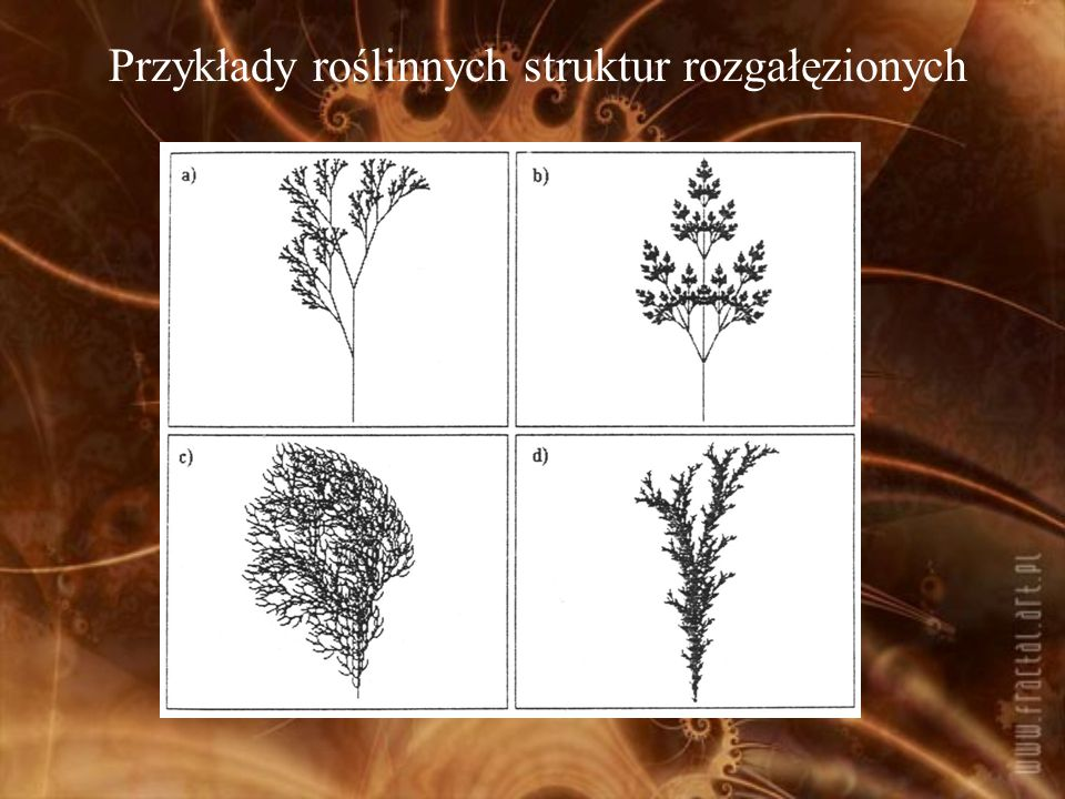 Przykłady roślinnych struktur rozgałęzionych