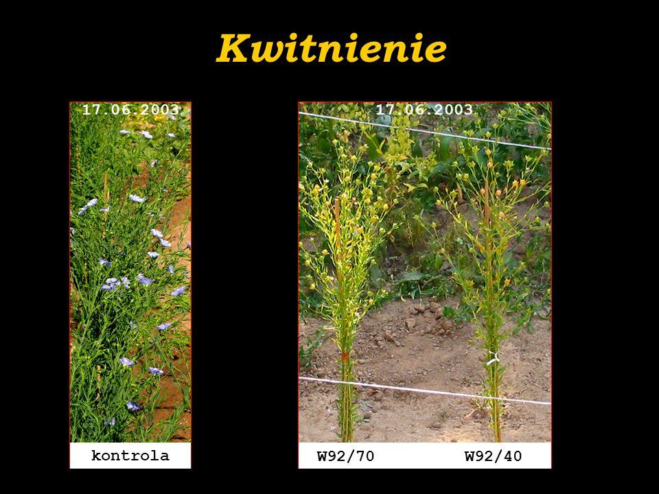 Kwitnienie kontrola 17.06.2003 W92/70 W92/40 17.06.2003