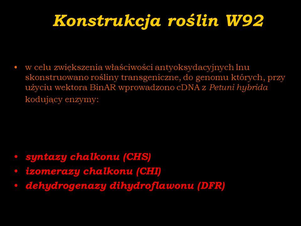Konstrukcja roślin W92 syntazy chalkonu (CHS) izomerazy chalkonu (CHI)