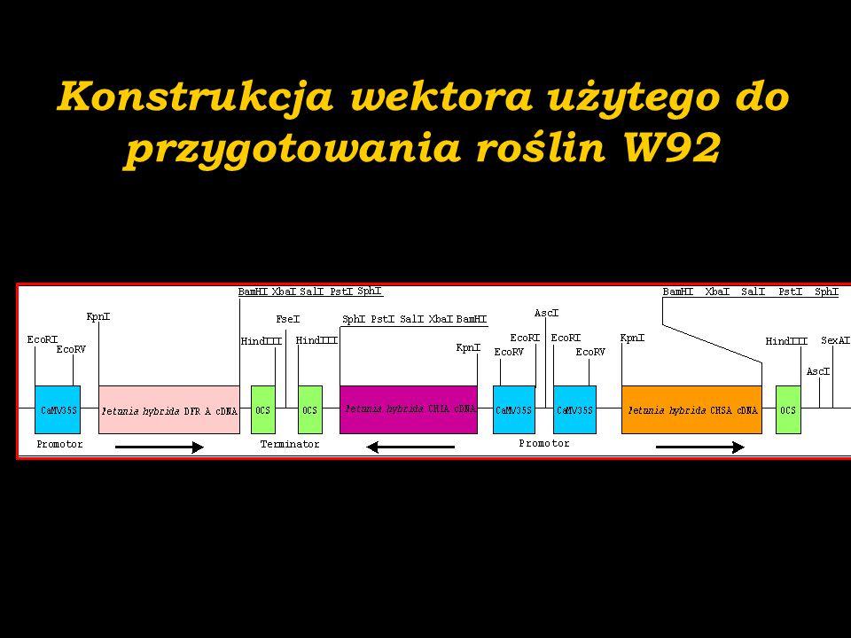 Konstrukcja wektora użytego do przygotowania roślin W92
