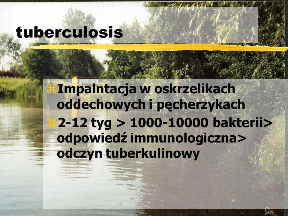 tuberculosis Impalntacja w oskrzelikach oddechowych i pęcherzykach