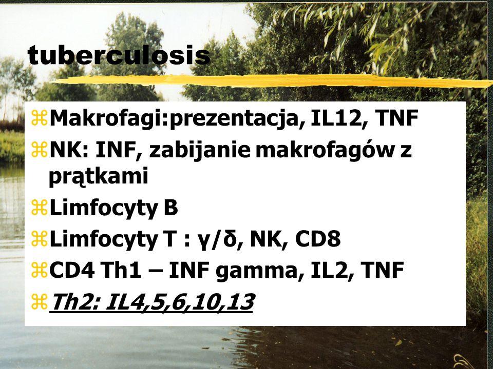 tuberculosis Makrofagi:prezentacja, IL12, TNF