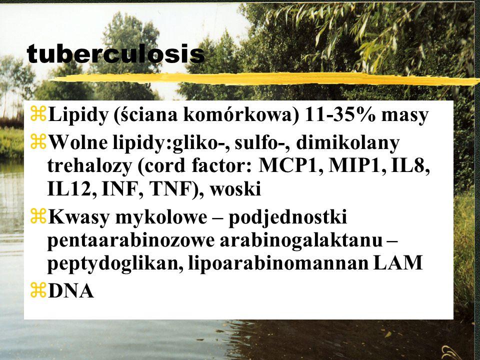 tuberculosis Lipidy (ściana komórkowa) 11-35% masy