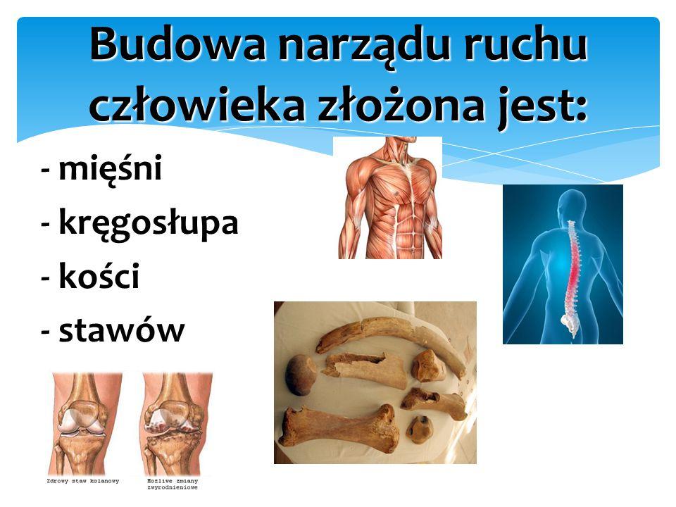 Budowa narządu ruchu człowieka złożona jest: