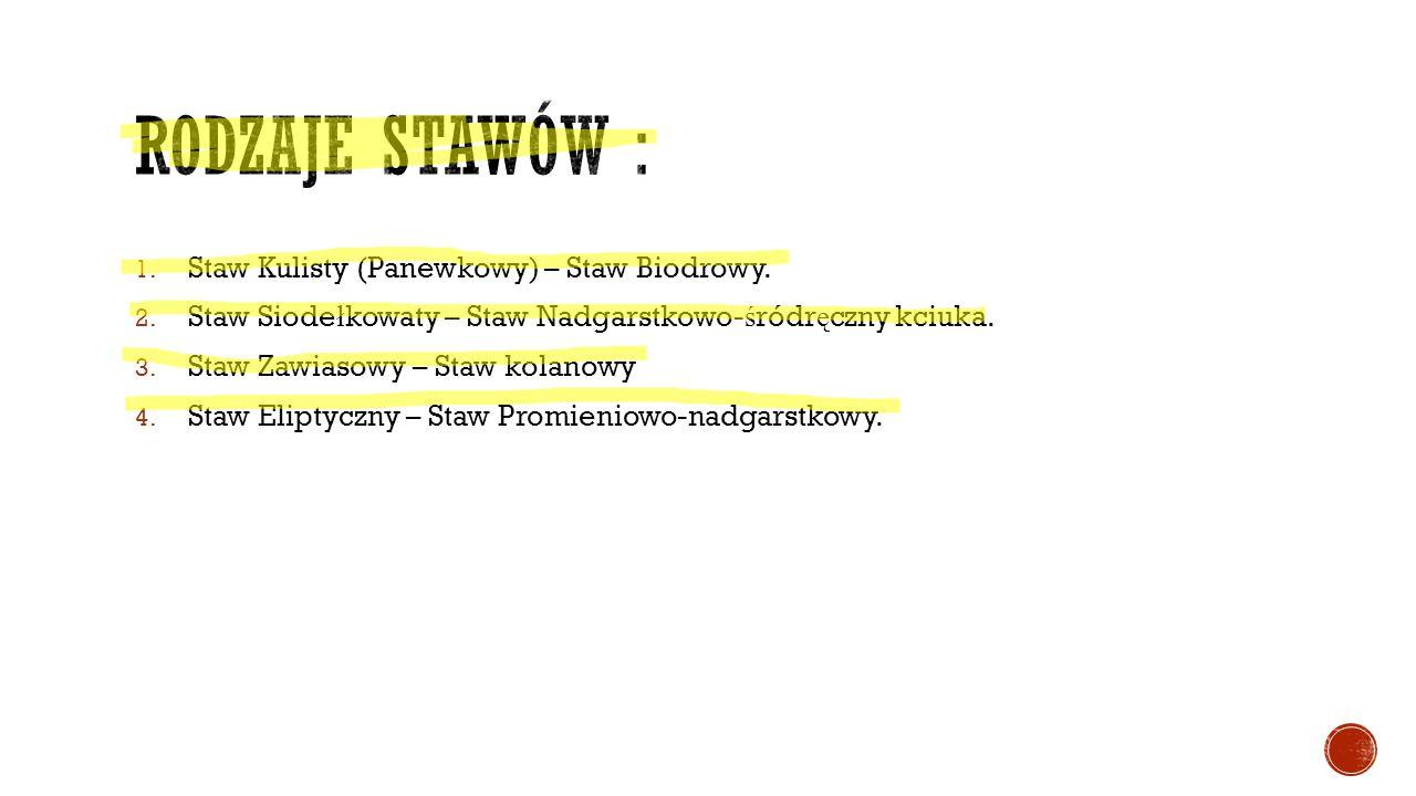 Rodzaje stawów : Staw Kulisty (Panewkowy) – Staw Biodrowy.