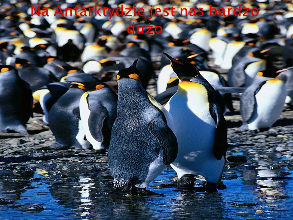 Na Antarktydzie jest nas bardzo dużo