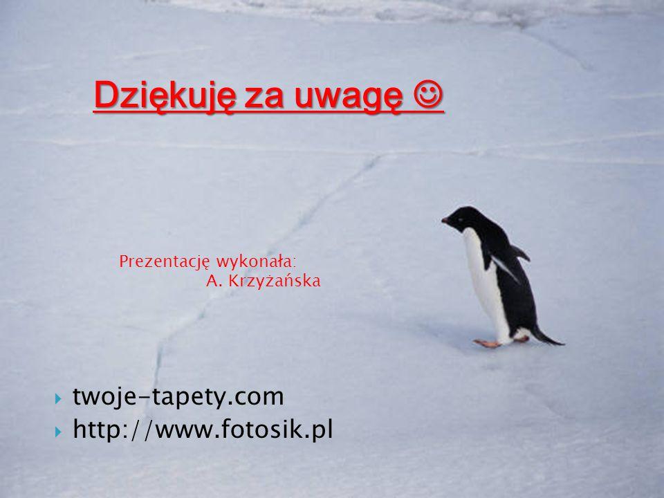 Dziękuję za uwagę  twoje-tapety.com http://www.fotosik.pl