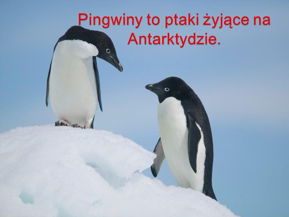 Pingwiny to ptaki żyjące na Antarktydzie.