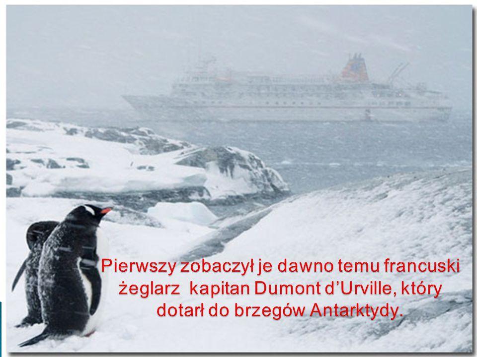 Pierwszy zobaczył je dawno temu francuski żeglarz kapitan Dumont d'Urville, który dotarł do brzegów Antarktydy.