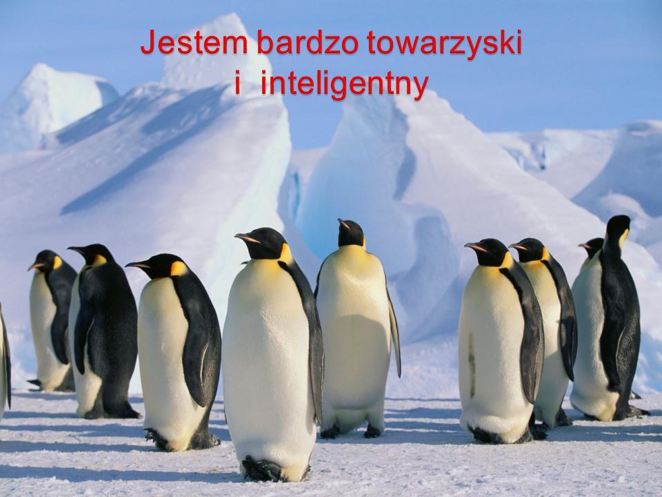 Jestem bardzo towarzyski i inteligentny