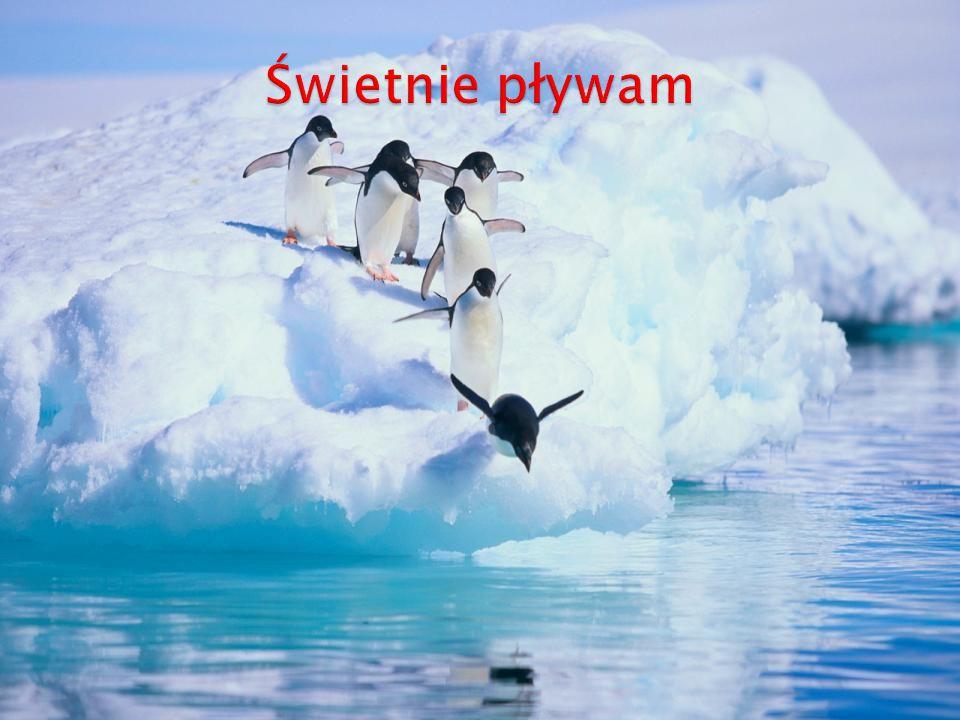 Świetnie pływam