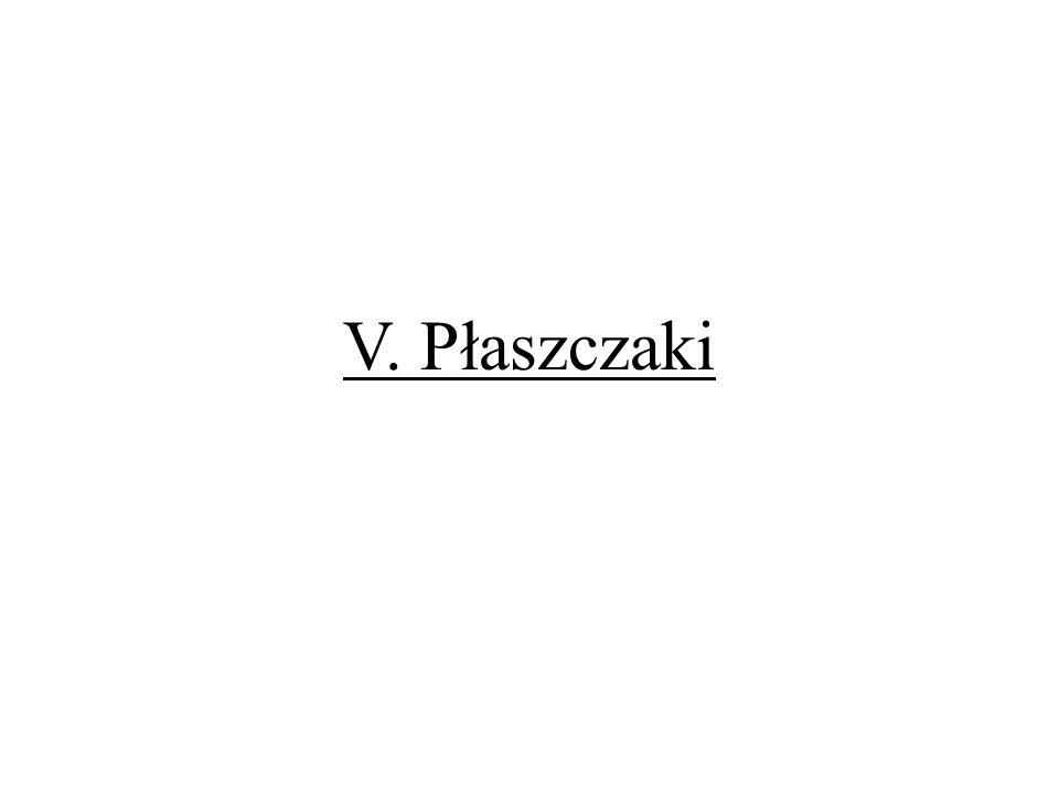 V. Płaszczaki